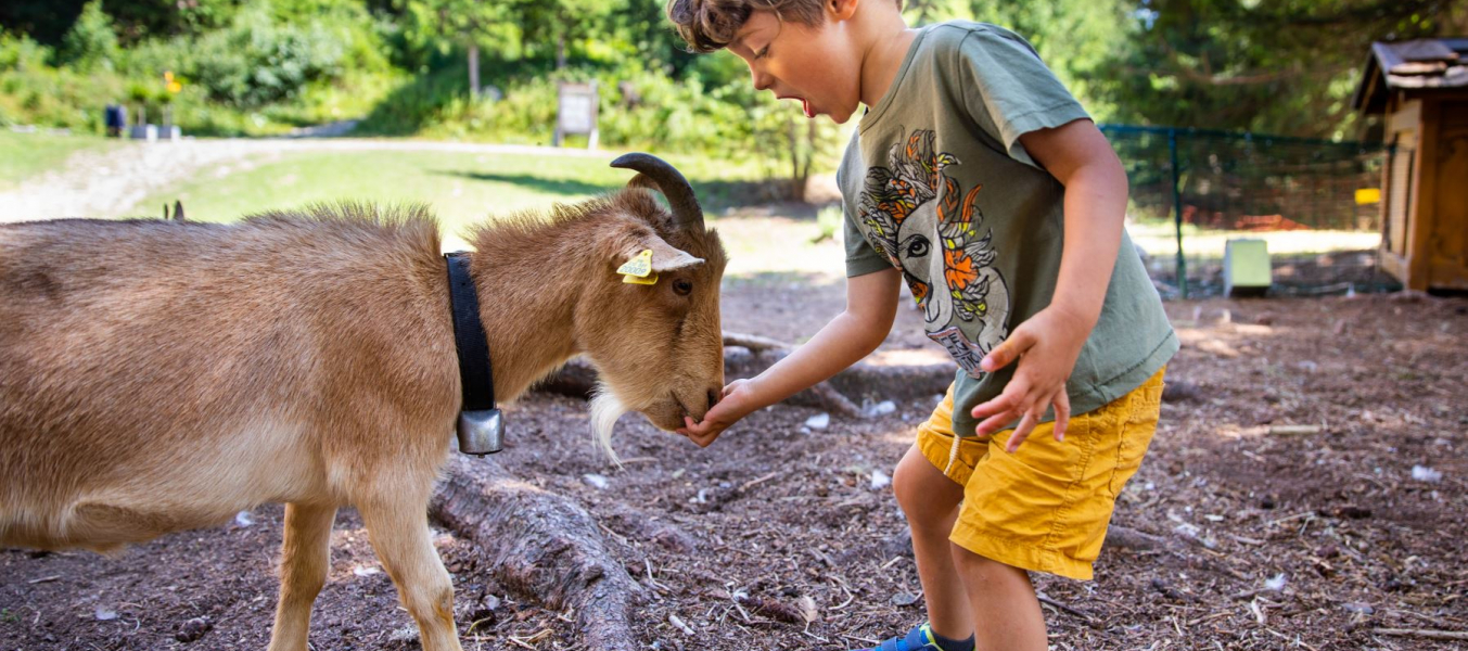 Goûter avec les animaux