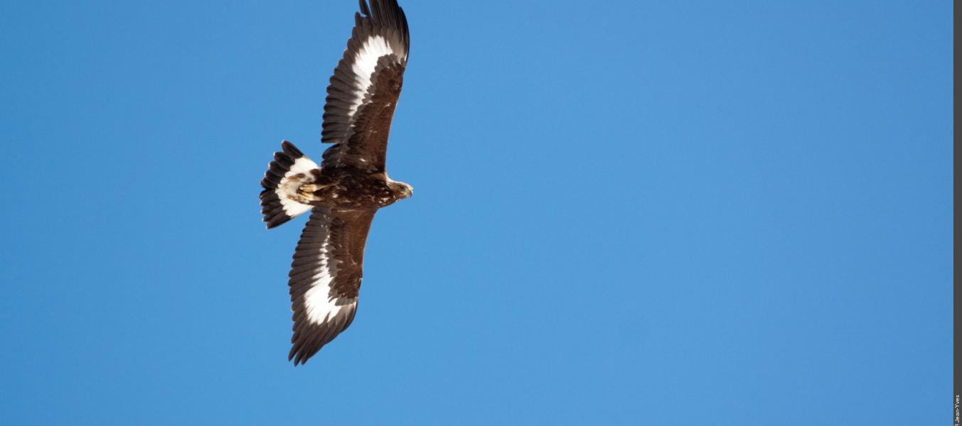 Découverte de la vie de l'aigle
