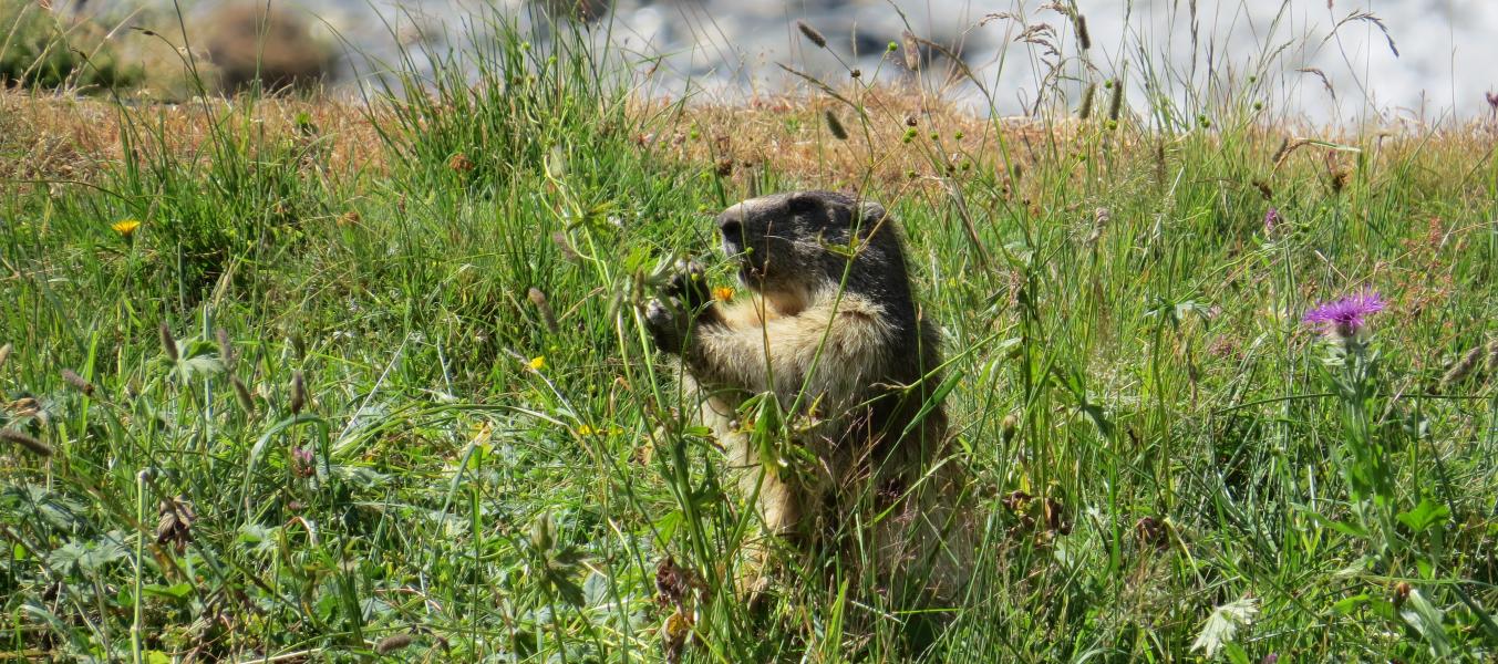 Journée Marmotte en Famille